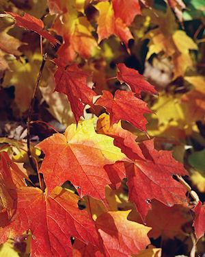 beautiful autumn colours