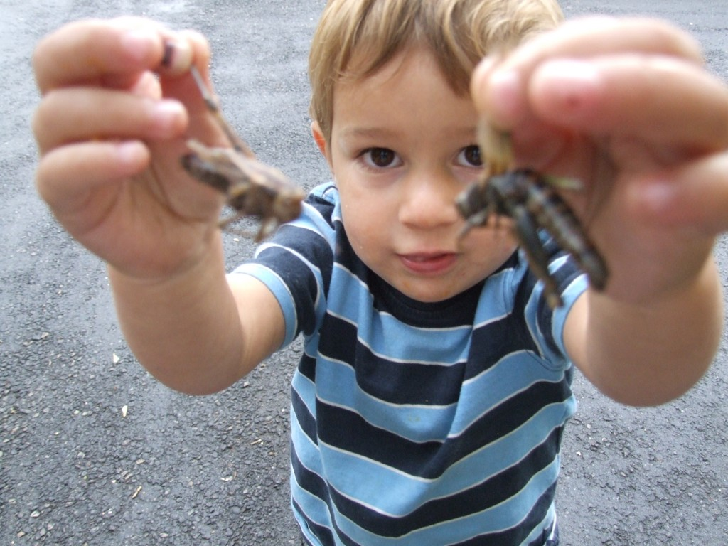 kid studying insect picture