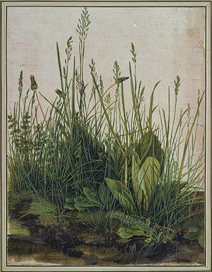 albrecht durer paintings pictures