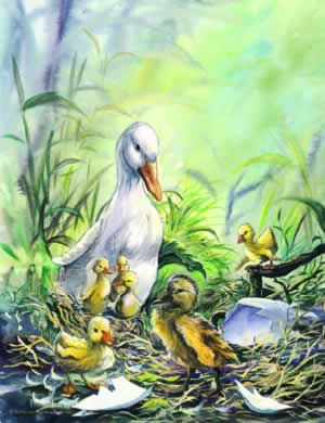 ugly duckling pictures