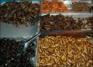 cooked insects picture