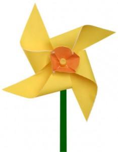 pinwheel daffodil picture