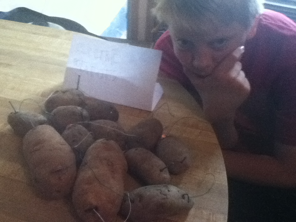 electric potatoes picture