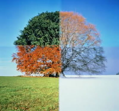 seasons Of Life pictures