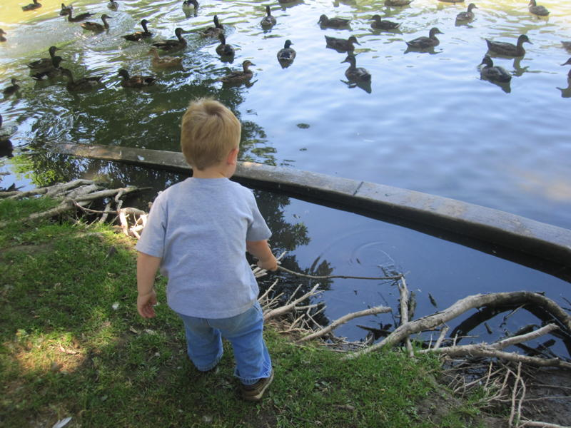 boy with ducks picture
