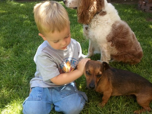 kid with dogs picture