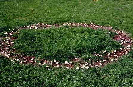 mushroom fairy ring picture