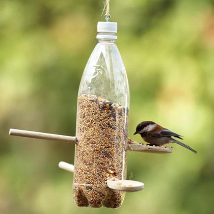 water bottle bird feeder craft pictures