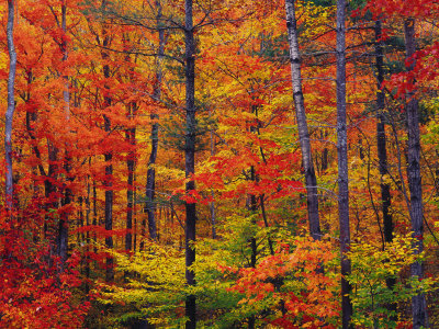 blazing fall colors picture
