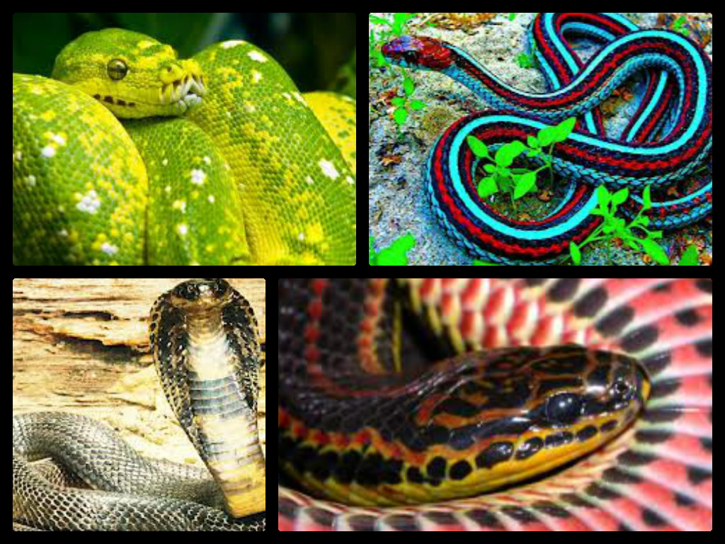 snake pictures
