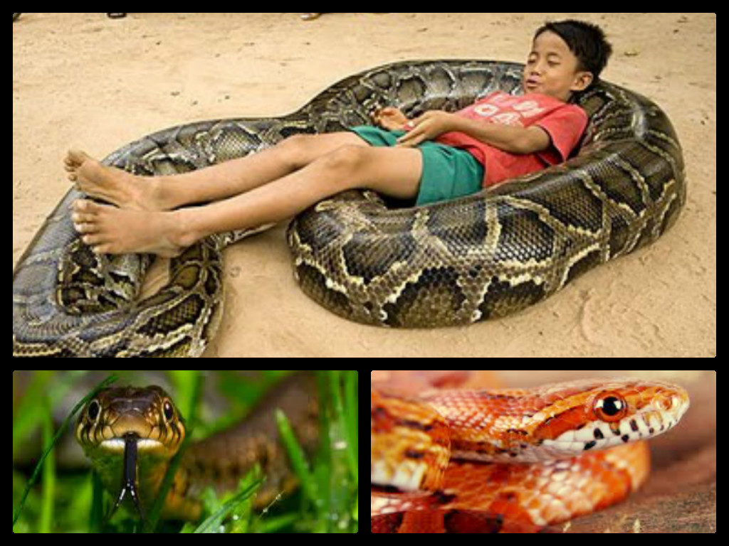 child with snake